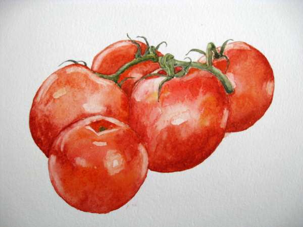 Tomatoes on the vine, watercolour
