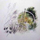 Weeping Ash Garden  Watercolour £80 45x45cm