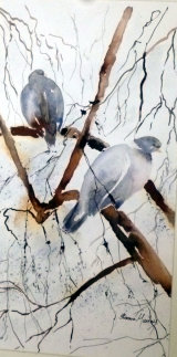 Wood Pigeons  Watercolour/Ink  46 X 26  £68