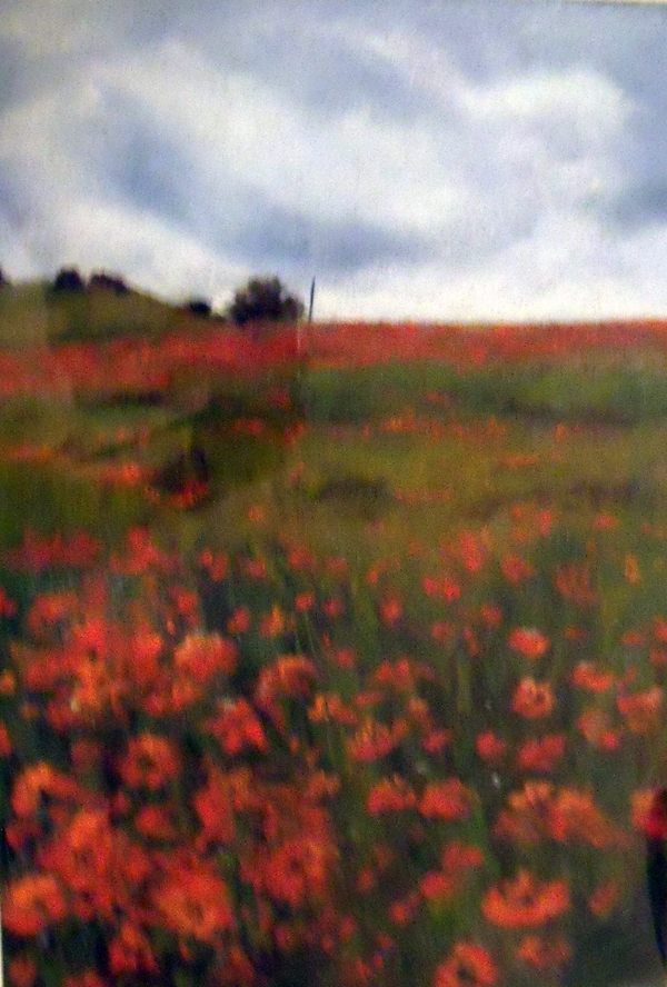 "Poppies,  17x22"", in Pastel,  £100"