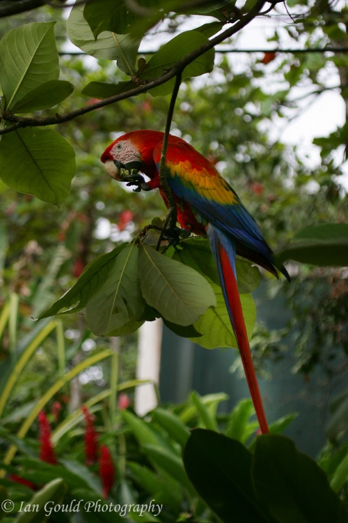 Costa Rica (23 of 33)