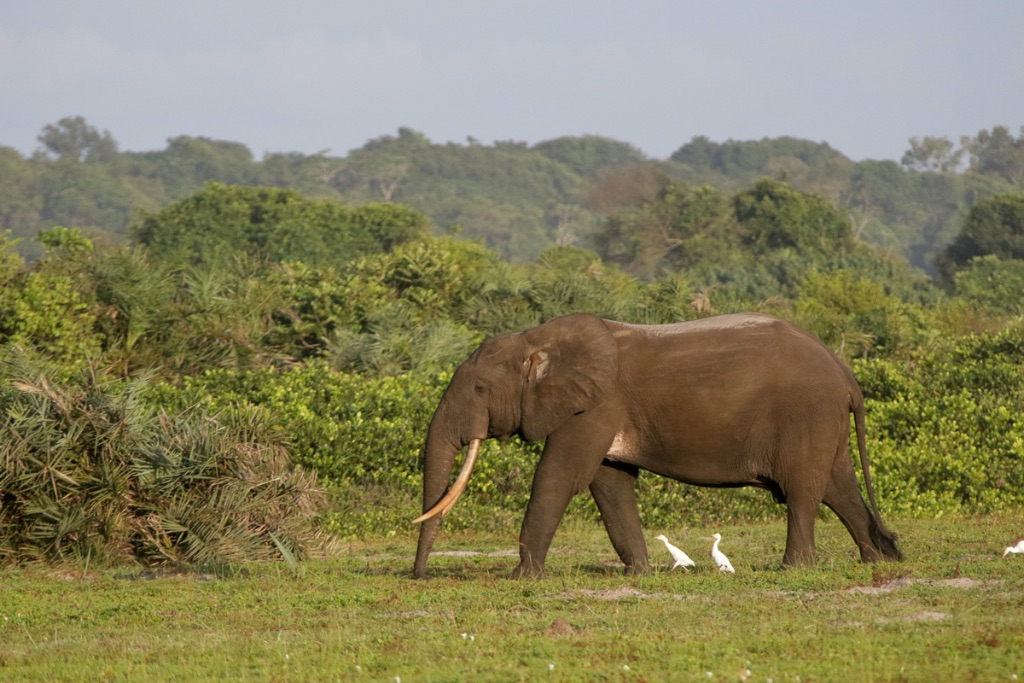 Gabon-79