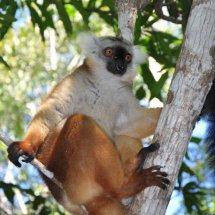 Madagascar (20 of 70)