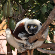 Madagascar (24 of 70)