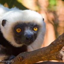 Madagascar (49 of 70)