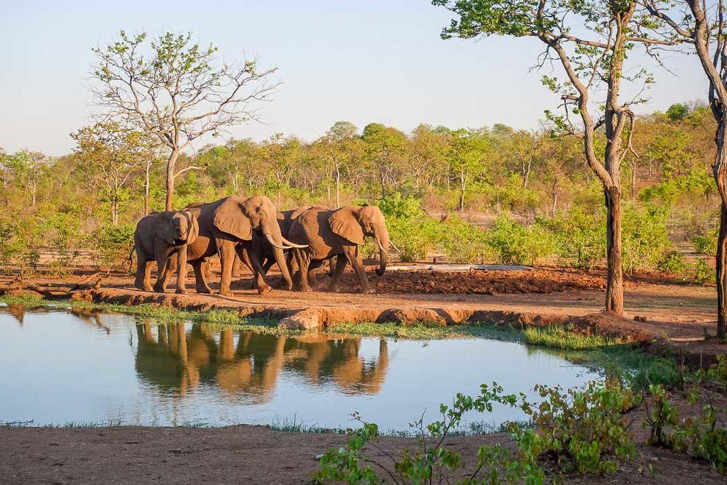 Zambia-88