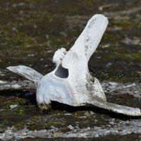 Beluga Bones - Ahlstrandhalvoya, Spitsbergen  (2/2)