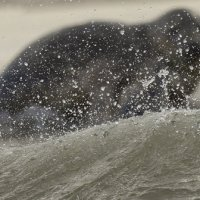 Grey Seal Blakeney Norfolk 12 11 2014 (3/6)