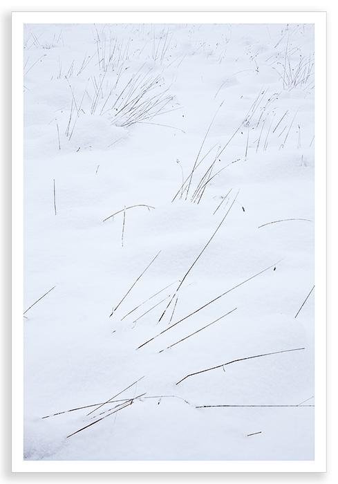Snow Grasses