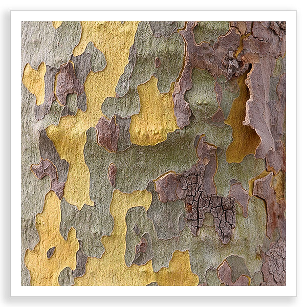 Pastel Bark