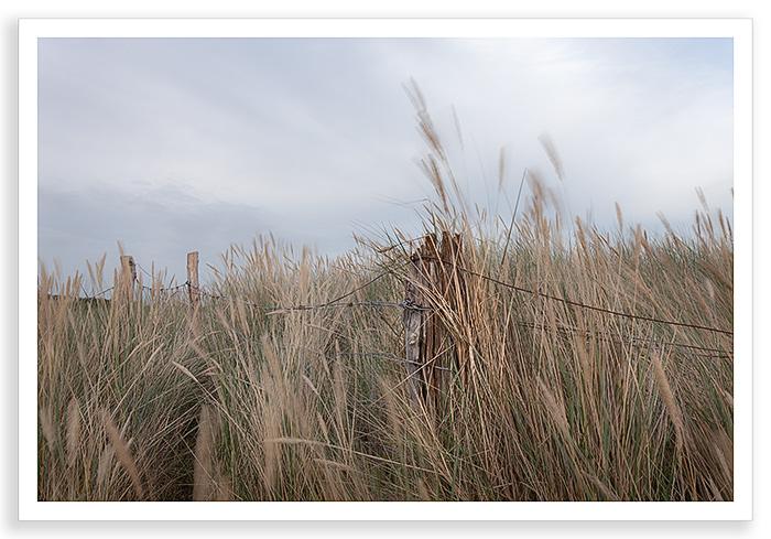 Duver Grass 2