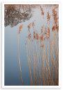 Radley Reeds 1