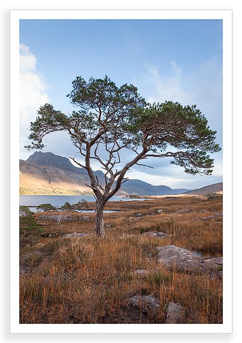 Scots Maree
