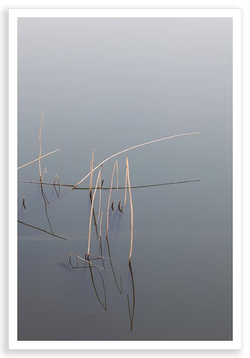 Radley Reeds 2