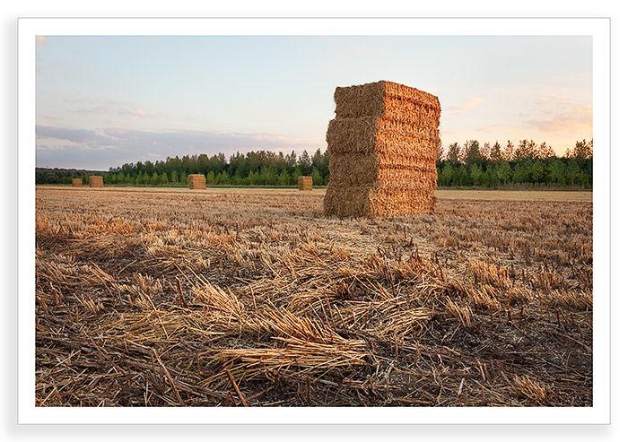 Harvest, Radley