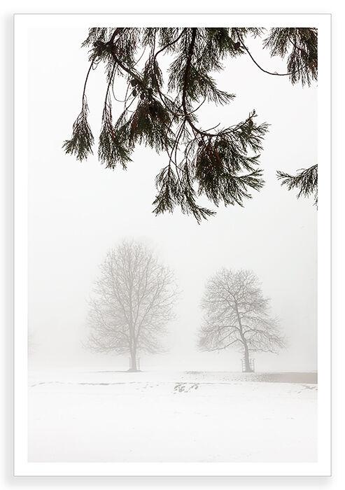 Winter, Trees