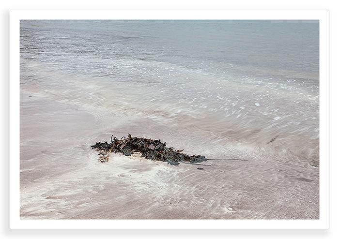 Seaweed Swirl