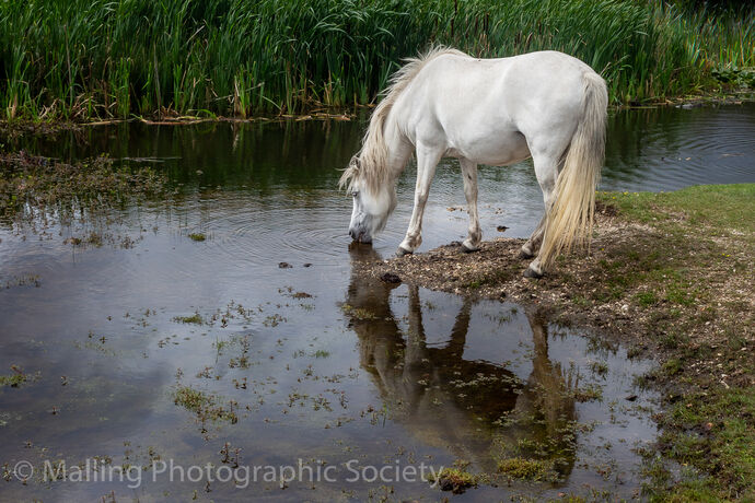 1 A Quick Drink in the New Forest by Paul Randell