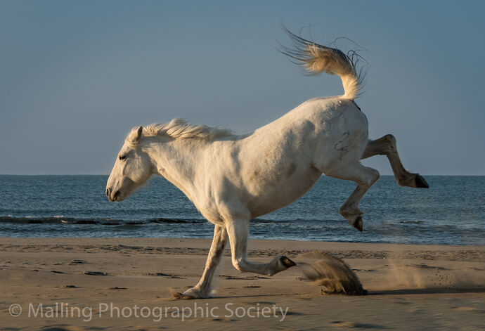 1 Leaping horse by Patricia Begley
