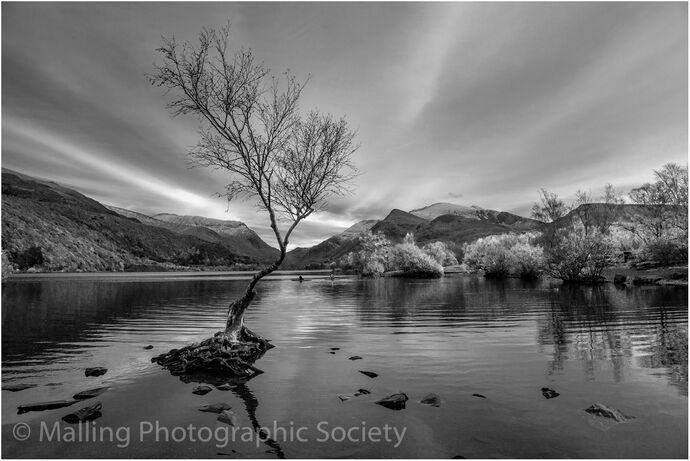 2 Lone tree Llanberis by Patricia Begley