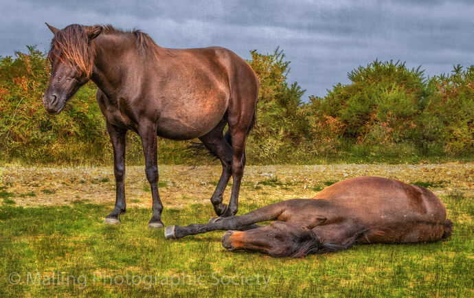 2 NEW FOREST NAP by Linton Schwarz