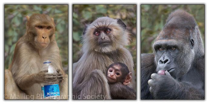 2 Primates by David Alston