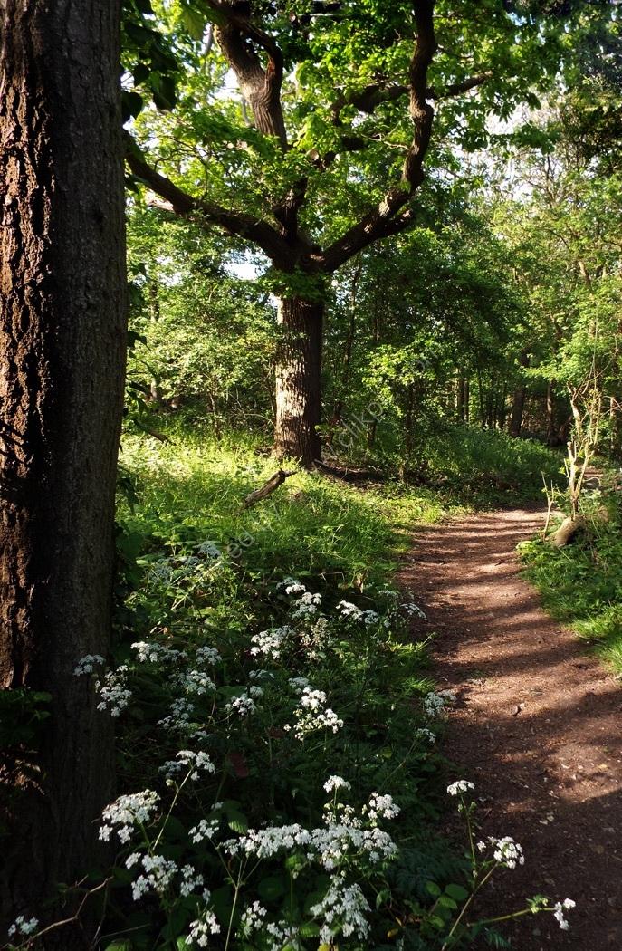 Woodland, Ranscombe Farm