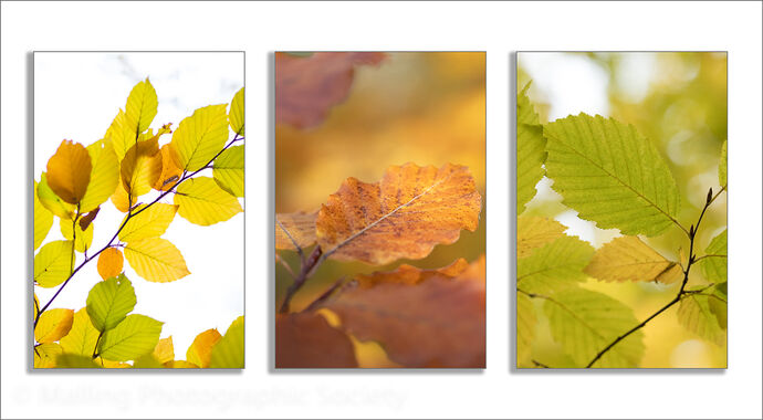 3 Autumn Leaves by James Alexander