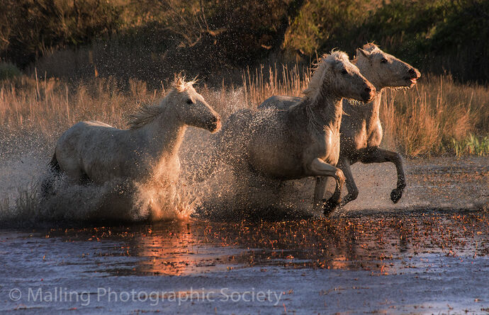 3 CROSSING THE MARSH by Patricia Begley