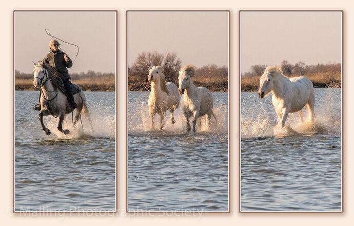 3 Camargue Horses by Patricia Begley