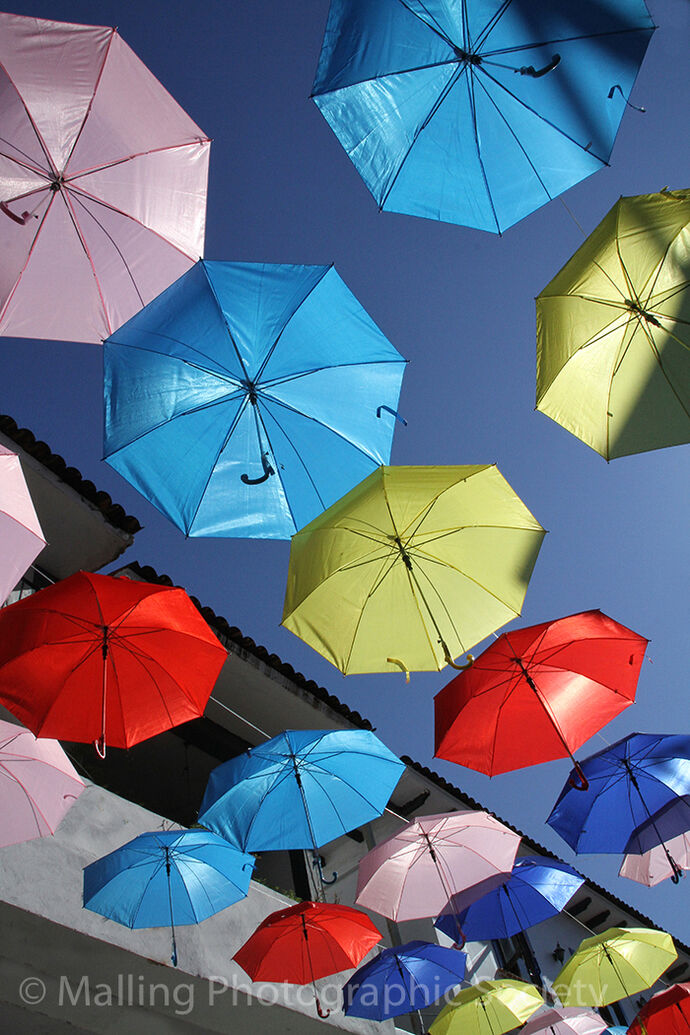 3 More Brollies by Dave Todd