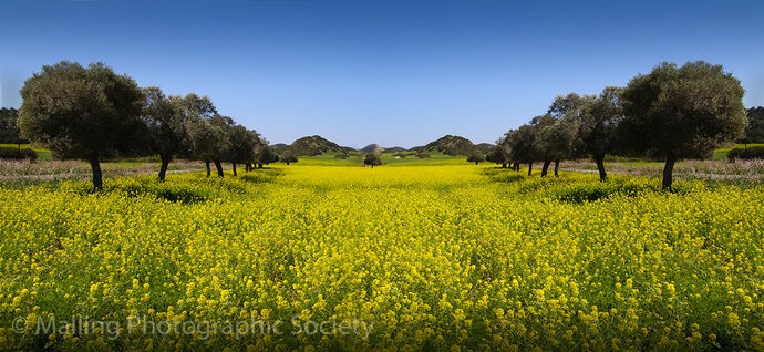 3 Olive Grove by Dave Todd