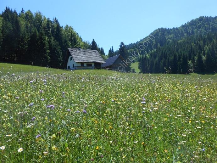 Slovenian Meadow