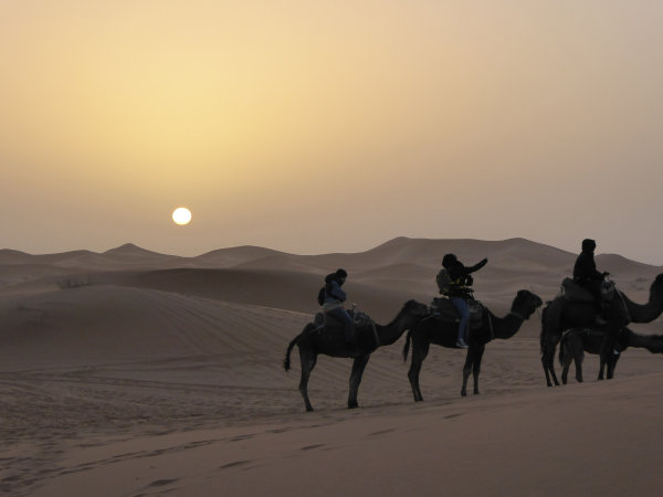 Camels in the Sahara