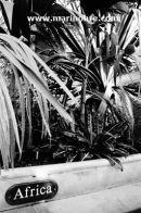Botanical gardens V
