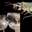 Lacewing exoskeleton