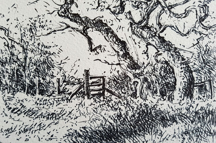 Hegerow with stile and trees. Contemporary Scottish landscape drawing. Original pen and ink drawing on cartridge paper by Marcer Campbell