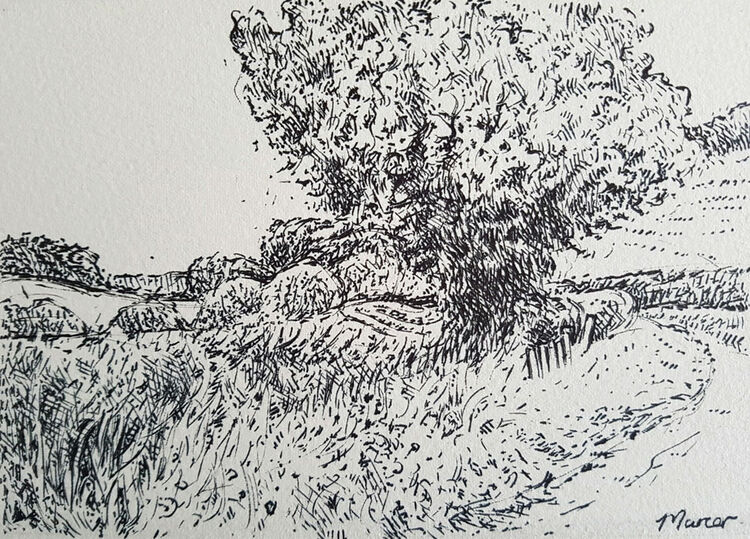 Summer walk, Lockerbie. Contemporary Scottish landscape drawing. Pen and Ink on cartridge paper by Marcer Campbell