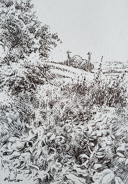Summer view. Beckton Road, Lockerbie. Contemporary Scottish landscape drawing. Pen and ink on cartridge paper by Marcer Campbell