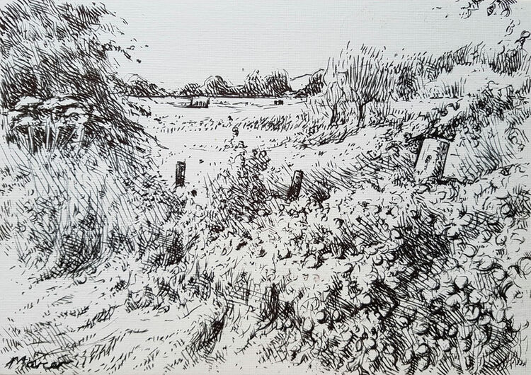 High summer hedgerow. Dumfrieshire. Contemporary Scottish landscape drawing. Pen and ink on cartridge paper by Marcer Campbell