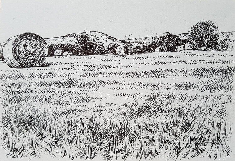 Harvest field. Dumfrieshire. Contemporary Scottish landscape drawing. Pen and ink on cartridge paper by Marcer Campbell