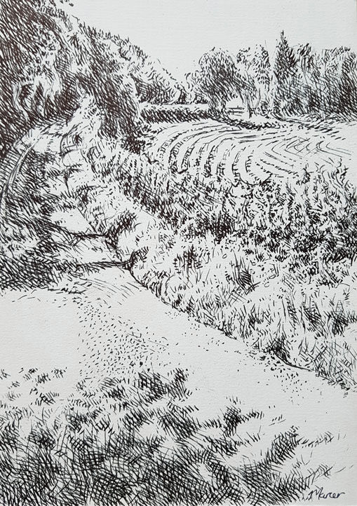 Turnmuirhill. Contemporary Scottish landscape drawing. Pen and ink on cartridge paper by Marcer Campbell