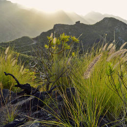 Anaga Mountains Tenerife