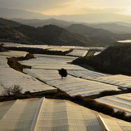 Plastic Landscape Field Of Greenhouses Motril Spain