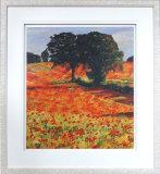 Evening Poppy Field - Web