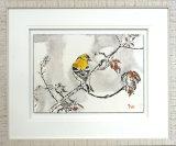 Finch - Framed