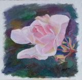 Pastel Pink Rose
