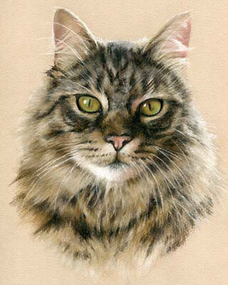 cat pastel portrait drawing