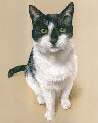 cat pastel portrait drawing