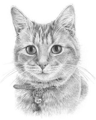 cat pencil portrait drawing